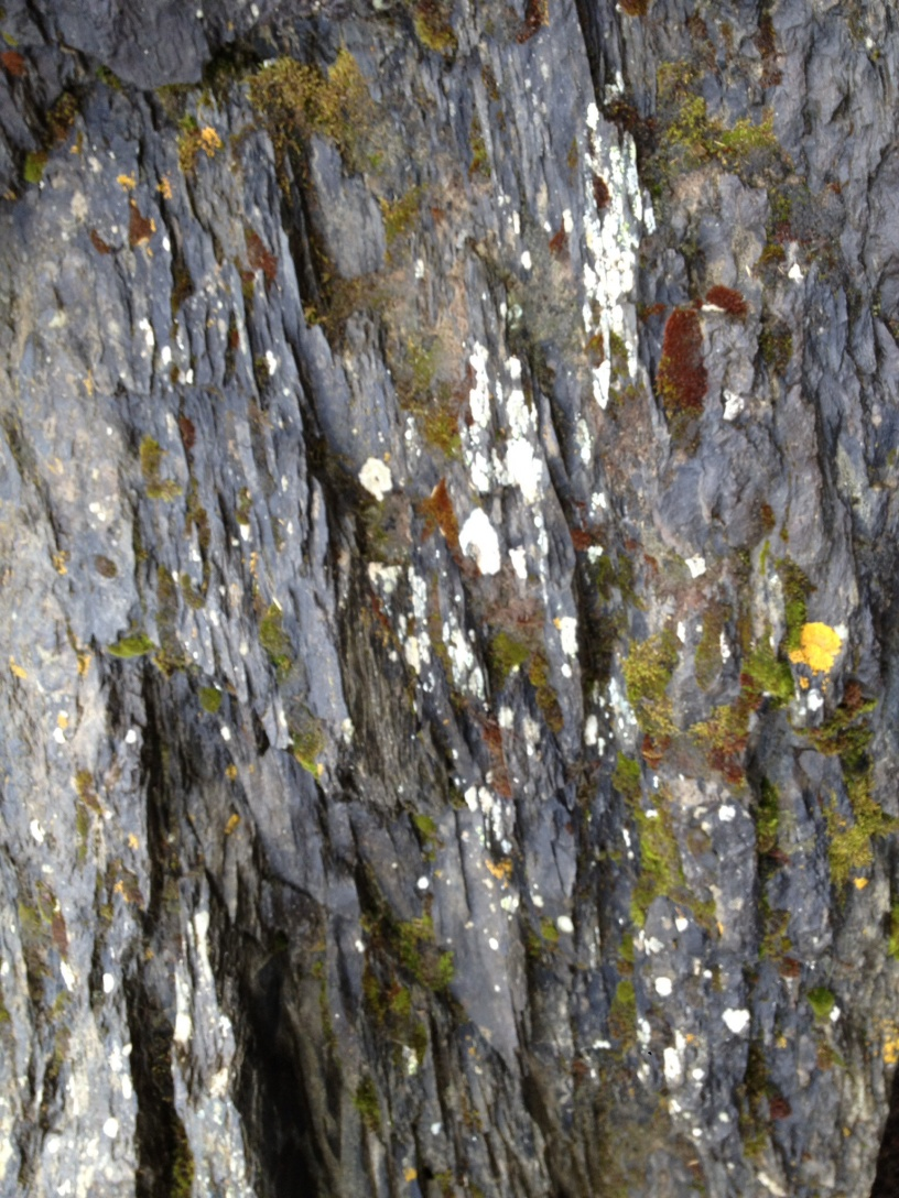 Close up of Tree Bark with Moss Tree