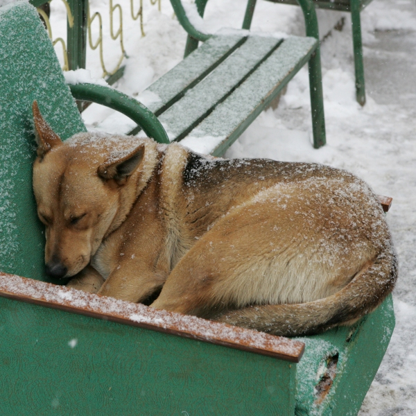 Homeless dog in winter
